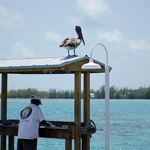 The sites of Bimini, Bahamas