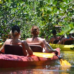 Kayaking through mangroves
